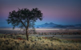 AFRICA – NAMIBIA – DEVOUT TREE