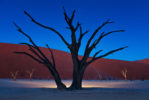 AFRICA – NAMIBIA – MOTHERTREE