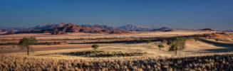 AFRICA – NAMIBIA – NAMIBIAN SAVANNA