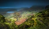 EUROPE – SCOTLAND – THE HANGING TREE