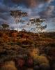 AUSTRALIA – KARIJINI – PILBARA MORNING