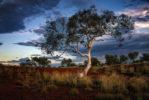 AUSTRALIA – KARIJINI – SNAPPY GUM